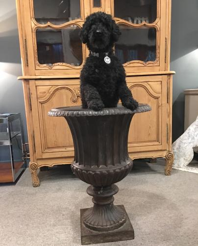 A large cast iron Campana urn