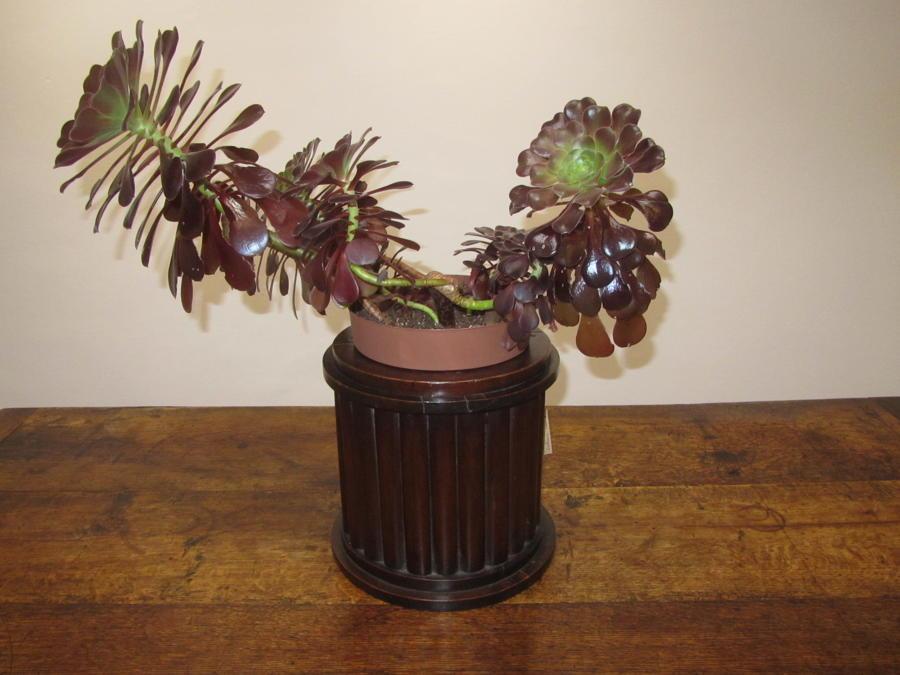 A mahogany planter